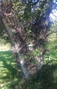 tree-mjneill